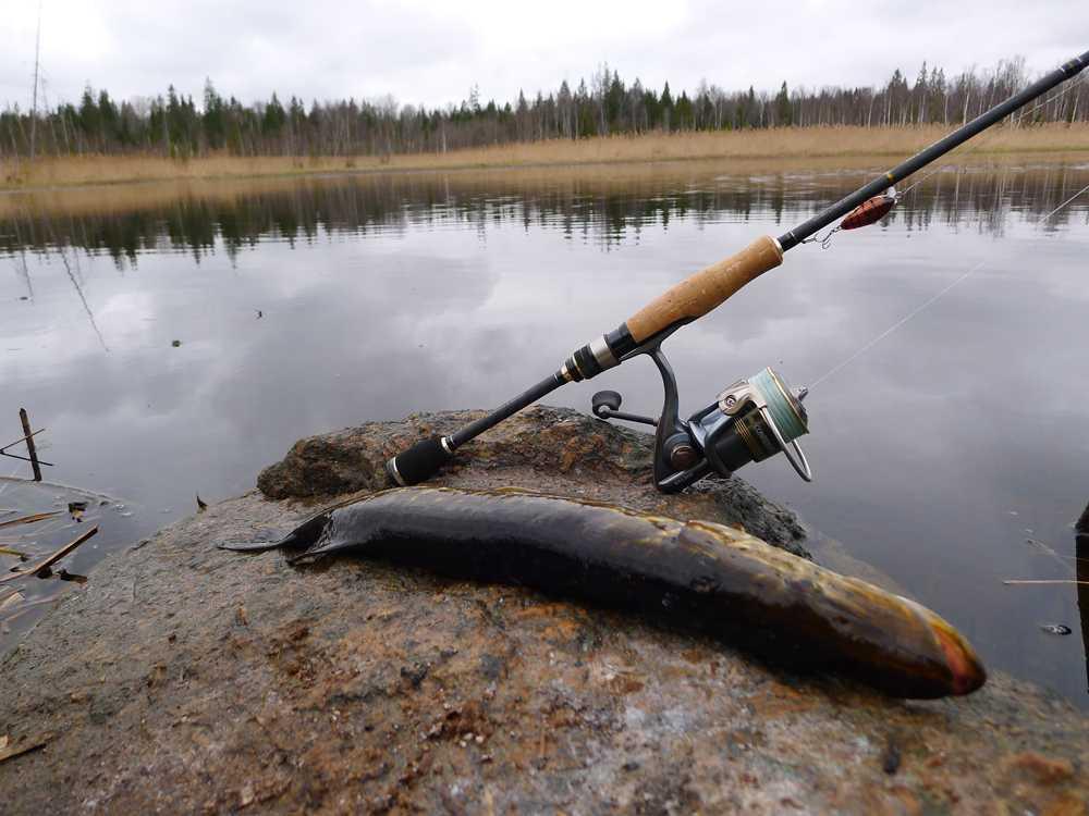 Купил спиннинг... а как же поймать рыбу?