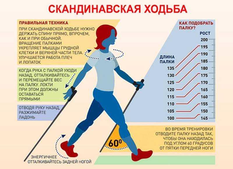 Как выбрать палки для скандинавской ходьбы: таблица по росту