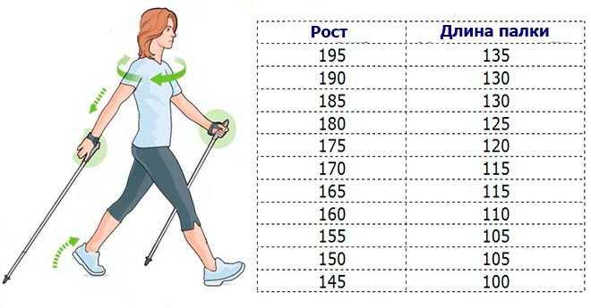 Скандинавская ходьба - польза, техника, правила, снаряжение, отзывы. выбор и покупка палок для скандинавской ходьбы