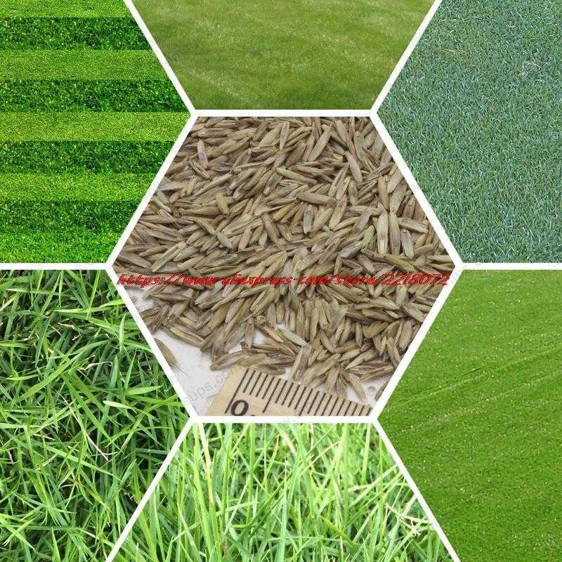Рассматриваем самые популярные виды газонов и выбираем лучший для дачи!