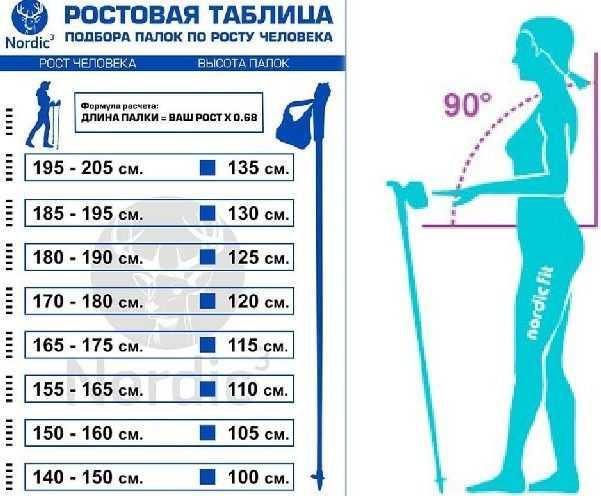 Выбираем лучшие палки для скандинавской ходьбы - топ-5 моделей