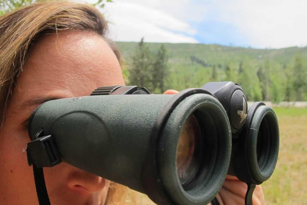 Бинокли для охоты: обзор, характеристики, советы по выбору