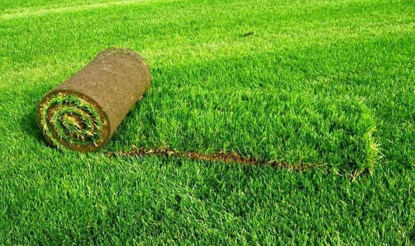 Какой газон лучше посадить на даче: описание разновидностей газонов и трав
