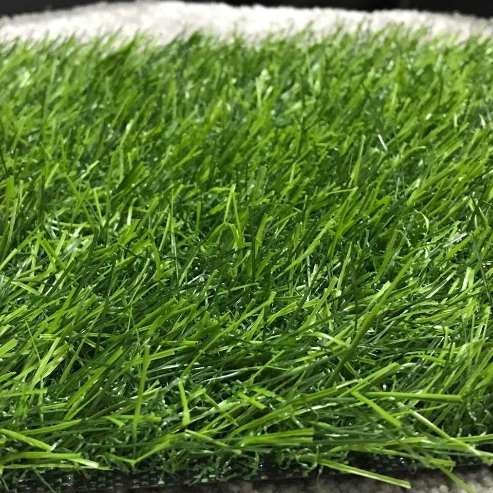 Низкорослая трава для газона не требующая стрижки
