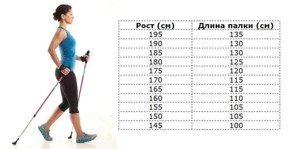 Как правильно выбрать палки для скандинавской ходьбы?