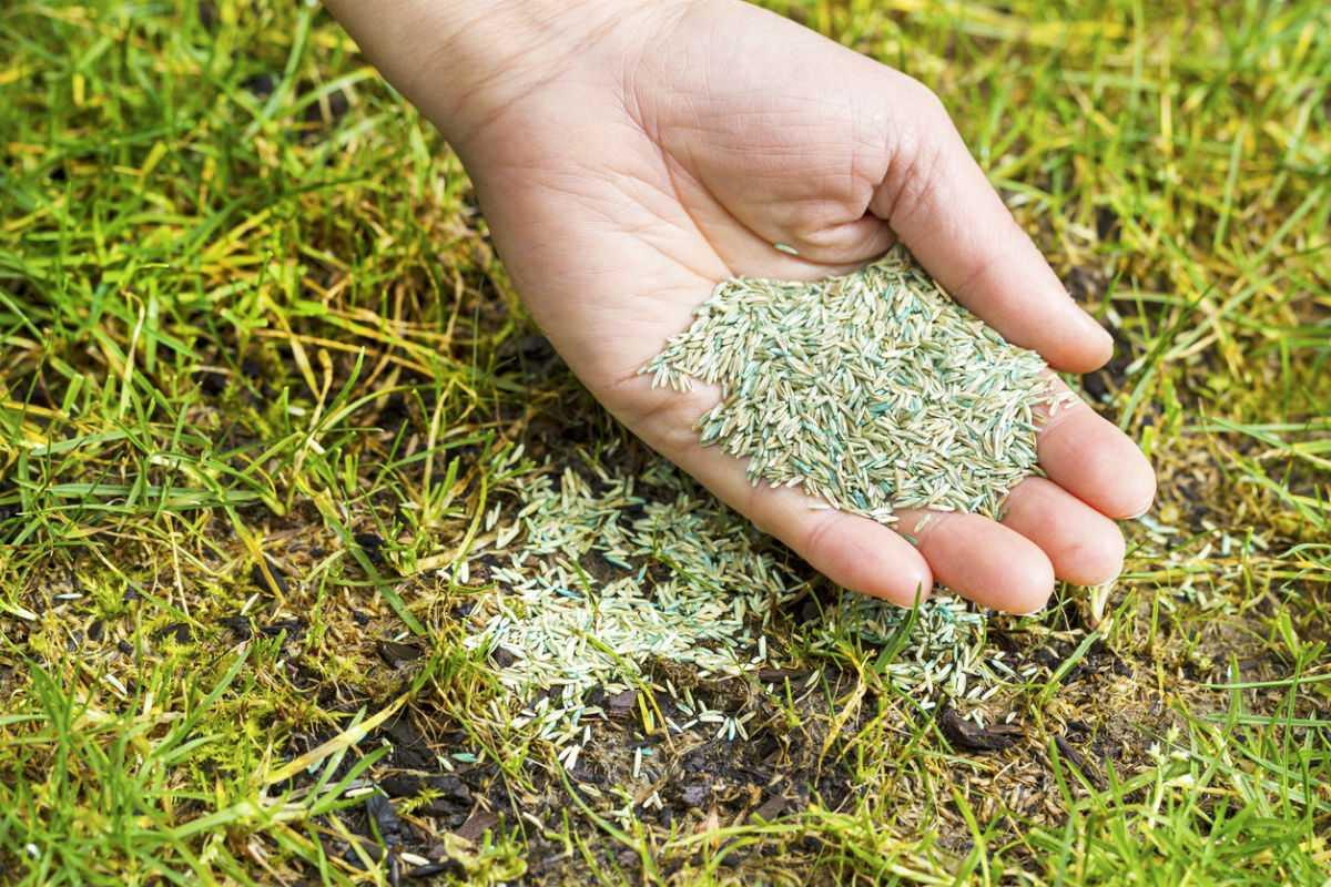 Топ-4 разновидности газонной травы: выбираем лучшую